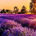 aromaterapia olejki eteryczne